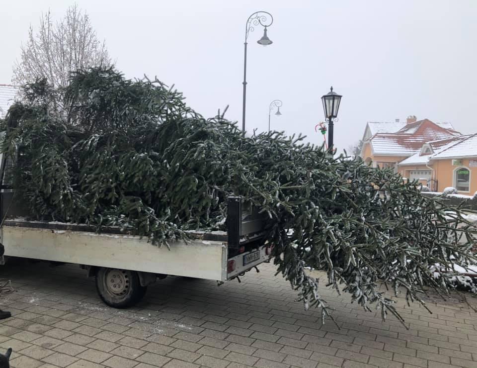 Megérkezett Mikepércs karácsonyfája a Főtérre