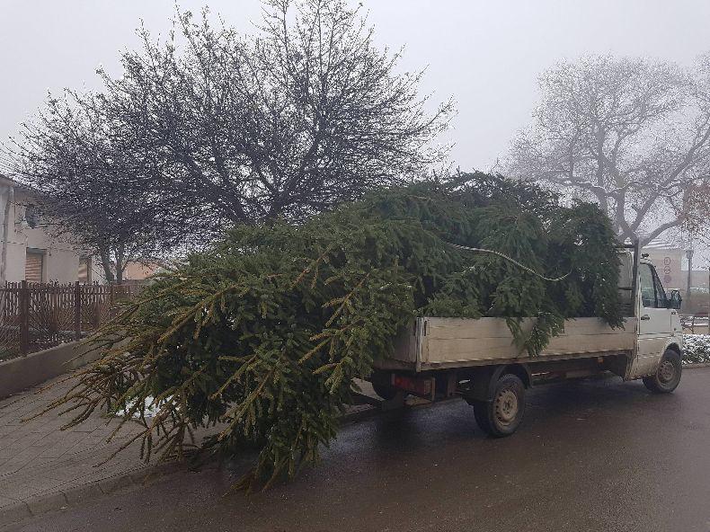 Megérkezett Mikepércs karácsonyfája